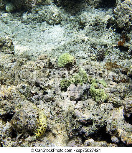 corales, arrecife, hermoso - csp75827424