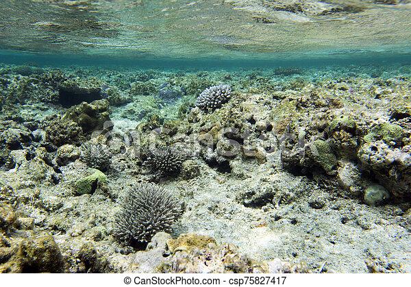 corales, arrecife, hermoso - csp75827417