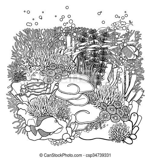 Corallo Disegno Scogliera Piante Coloritura Arte Corallo