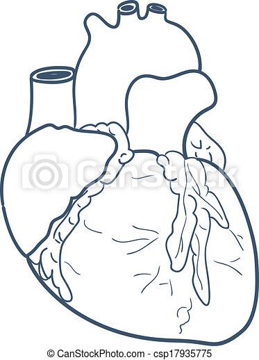 Corazón, anatómico, aislado, white. Bosquejo, médico, elemento ...