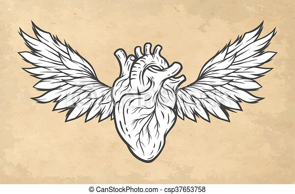Corazón, anatómico, alas, símbolo. Wings., corazón, tatuaje ...