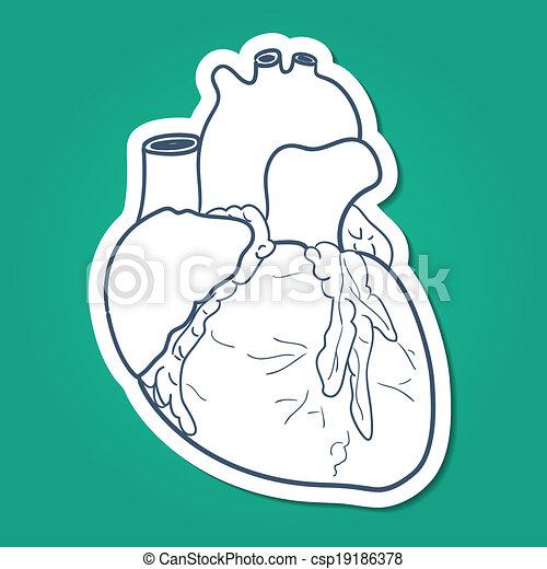 Corazón, anatómico, humano, organ. Bosquejo, médico, elemento ...