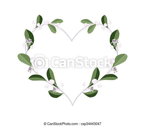 Corazón Calotropis Flores Gigantea Forma Corazón Calotropis