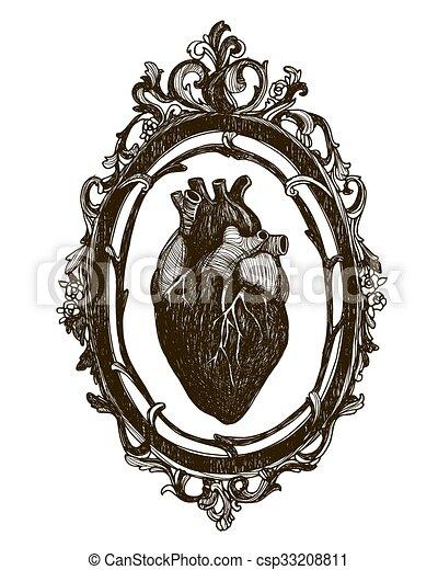 Corazón, humano, anatómico. Corazón, illustration., vendimia, marco ...