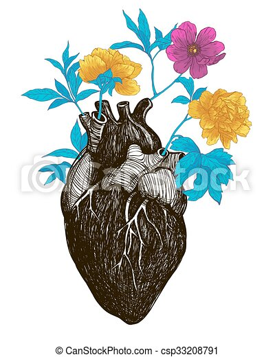 Corazón, humano, anatómico. Corazón, flores, illustration., vendimia ...