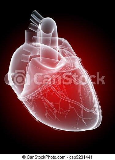 Corazón, humano. Corazón, rendido, ilustración, anatomía, humano, 3d.