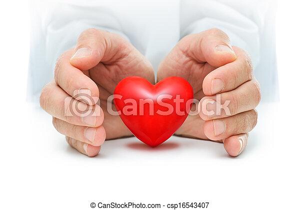 Corazón, manos humanas. Corazón, protegido, rojo, manos humanas.
