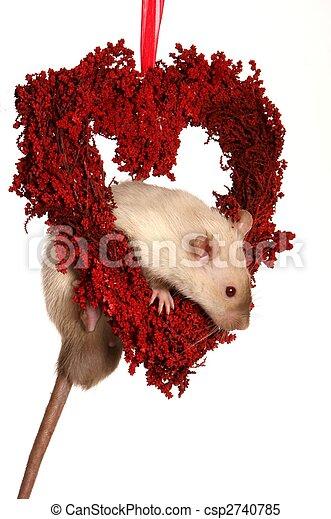 Rata en el corazón rojo - csp2740785