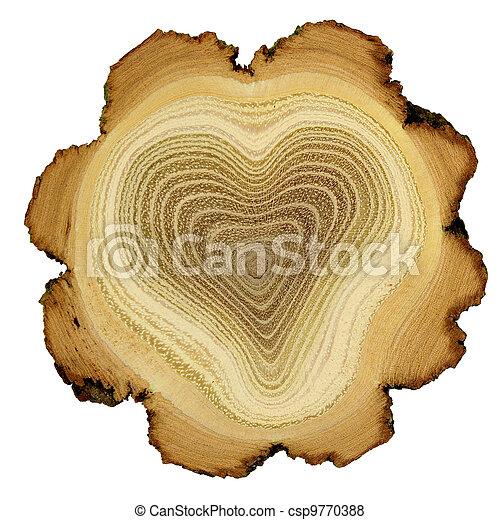 Corazón de árbol, anillos de crecimiento del árbol de acacia, sección cruzada - csp9770388