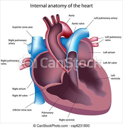 Corazón, sección, rotulado, cruz. Sección, eps8, corazón, humano, cruz.