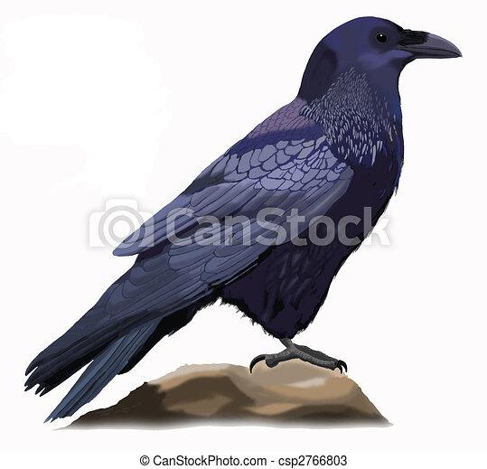 corbeau commun - csp2766803