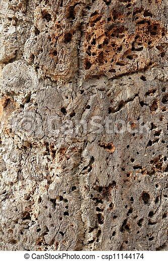 Piel de corcho - csp11144174