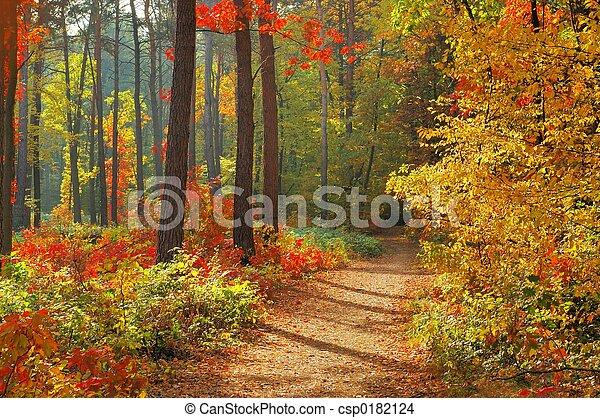 cores, outono - csp0182124