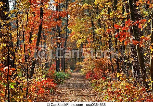 cores, outono - csp0364536