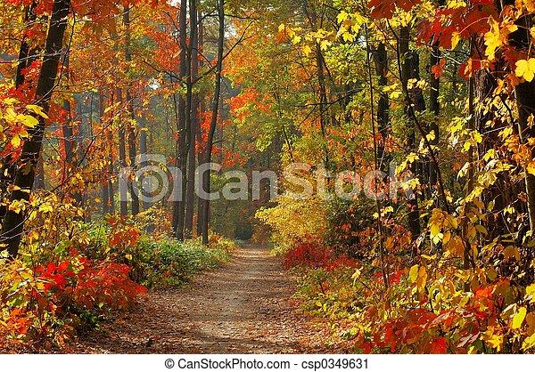 cores, outono - csp0349631