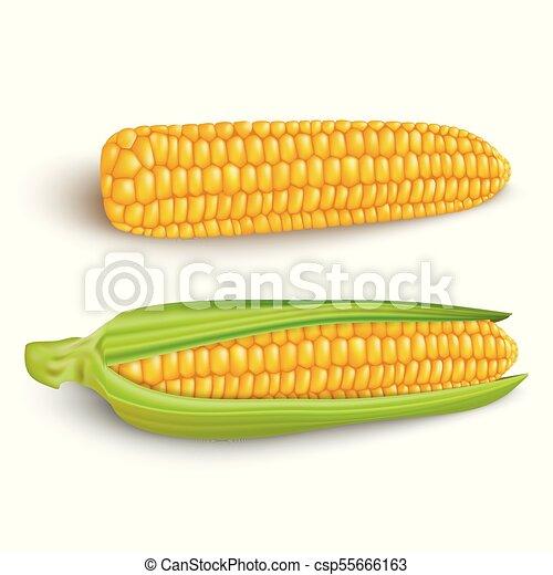 Corn cobs on white background. - csp55666163