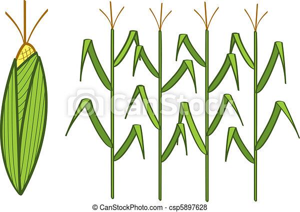 four corn stalks and a corn cob vector search clip art rh canstockphoto com Beachmont Corn Maze corn stalk clipart black and white