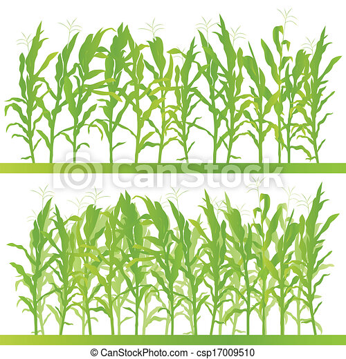 corn field detailed countryside landscape illustration background rh canstockphoto com cornfield clipart free Corn Field Drawing