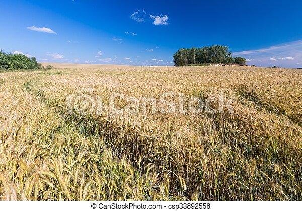 Corn field landscape - csp33892558