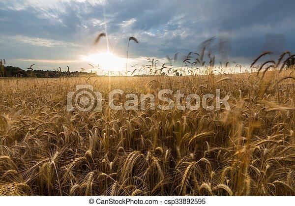 Corn field landscape - csp33892595