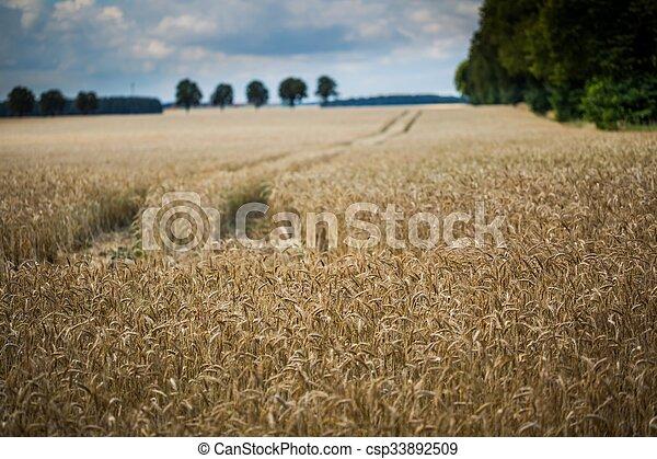 Corn field landscape - csp33892509
