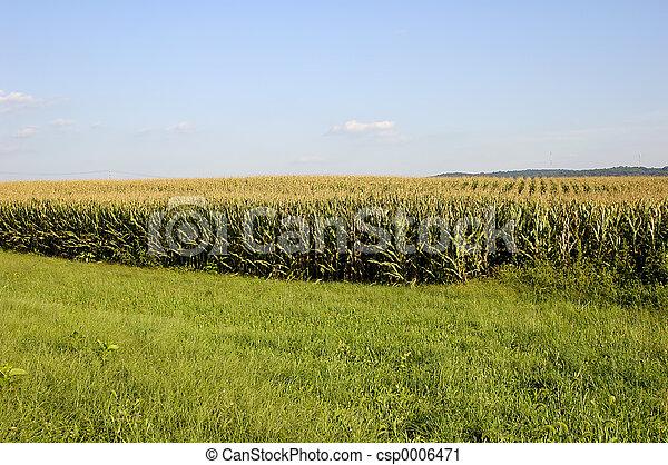 Corn Field - csp0006471