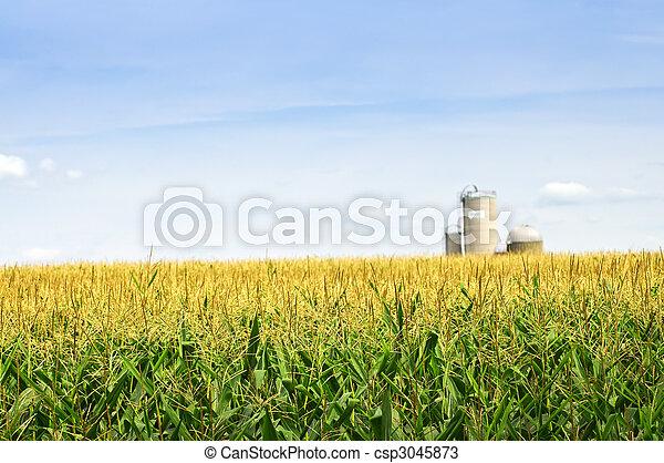 Corn field with silos - csp3045873