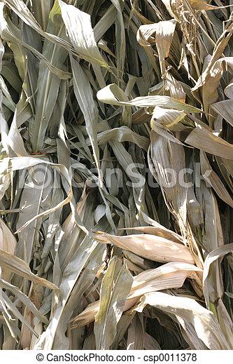 Corn Leaves - csp0011378