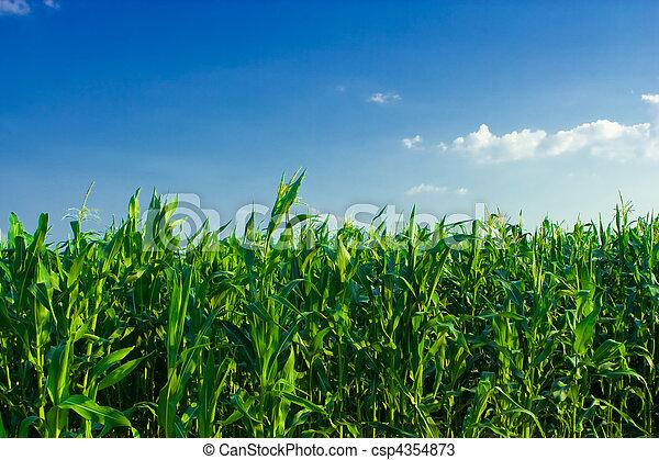 corn on a heaven - csp4354873