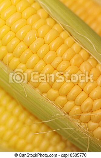 Corn - csp10505770