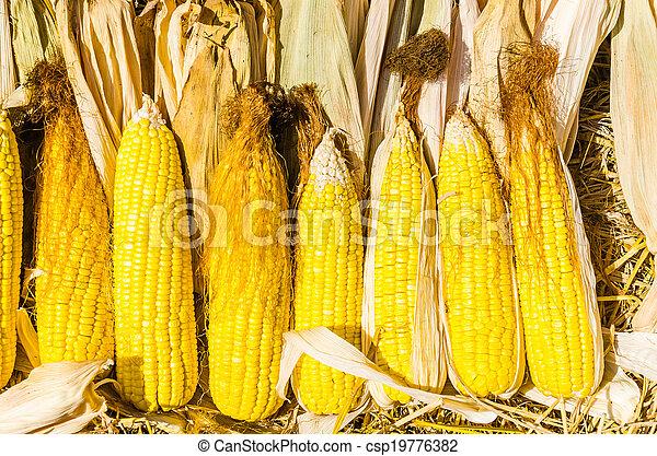 Corn - csp19776382