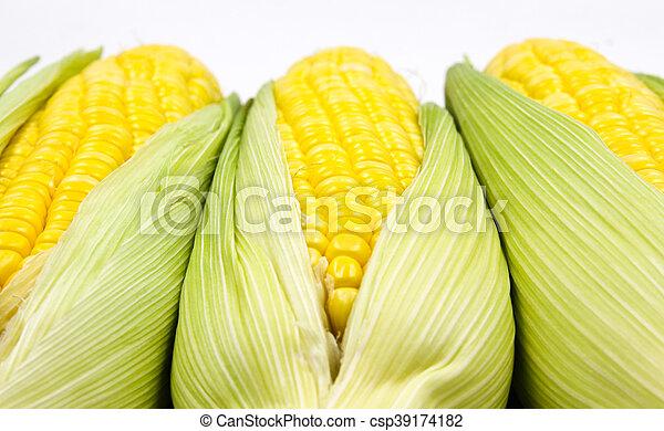 Corn - csp39174182
