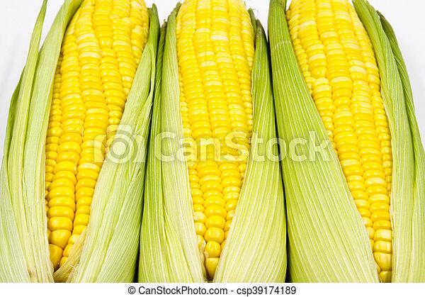 Corn - csp39174189