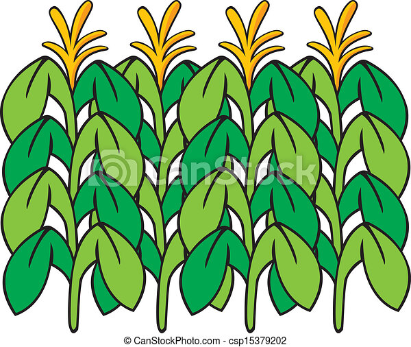 vector illustration of corn stalks vector clipart search rh canstockphoto com corn stalk bundle clipart