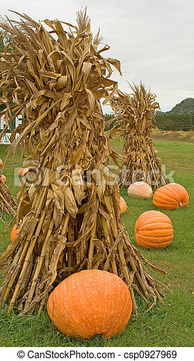 Corn Stalks Fall Corn Stalk Bundles And Large Orange Pumpkins