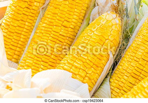 Corn - csp19423064