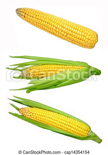 corn - csp14354154
