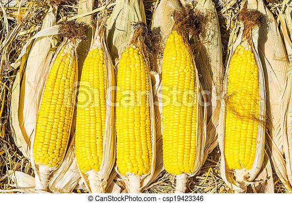 Corn - csp19423346