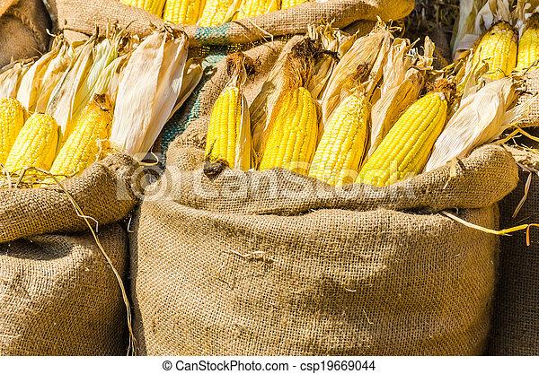 Corn - csp19669044
