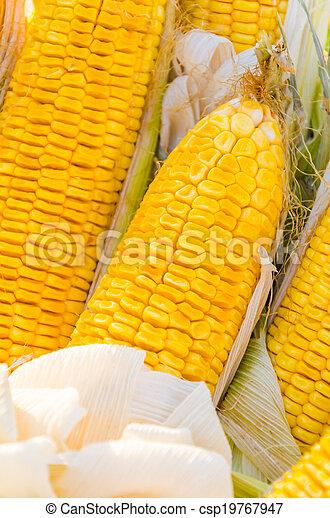 Corn - csp19767947