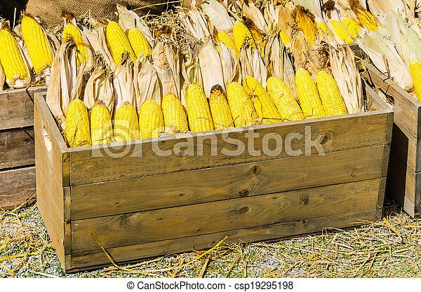 Corn - csp19295198