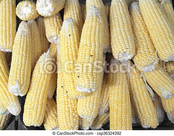 corn - csp36324392