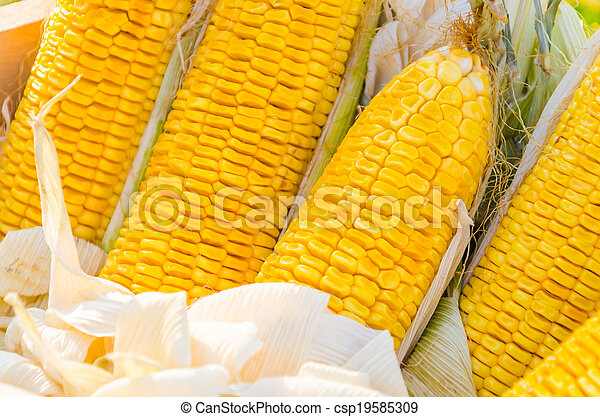 Corn - csp19585309