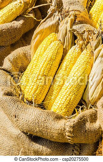 Corn - csp20275500