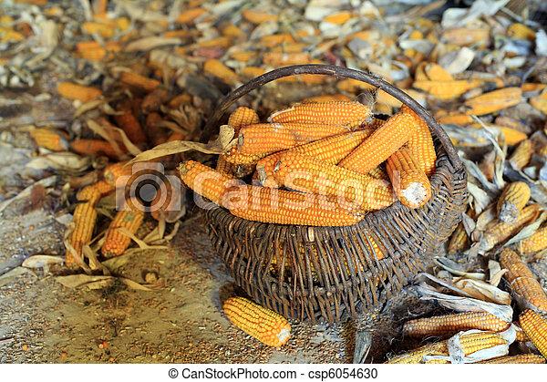 Corn - csp6054630