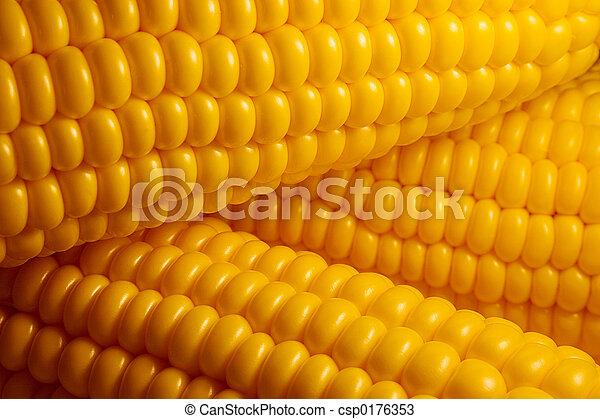 Corn - csp0176353