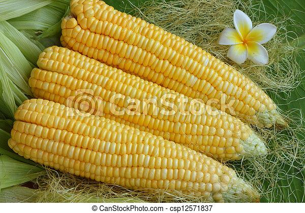 Corn  - csp12571837