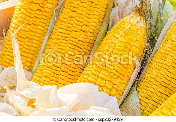 Corn - csp20279439