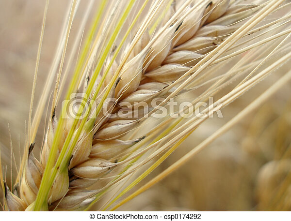 Close up of corn straw stock photo search pictures and photo corn straw stock photo sciox Choice Image
