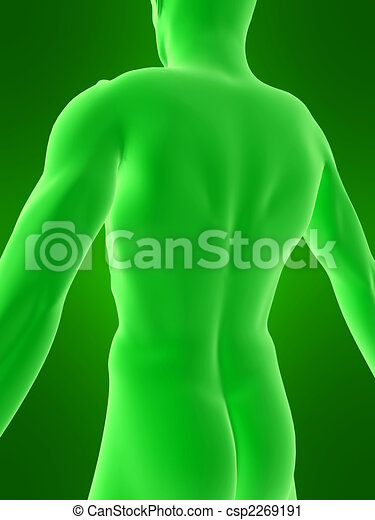 corpo umano - csp2269191